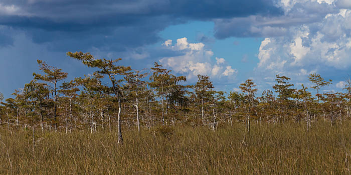 Cypress Trees in the Everglades by Ed Gleichman