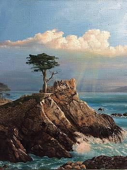 Cyprus Pine by Cecilia Brendel