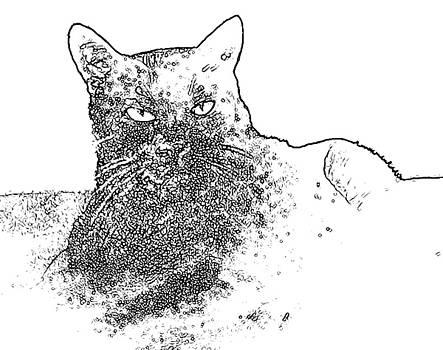 Kathleen Heese - D cat