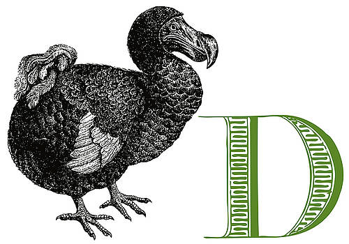 D Dodo by Thomas Paul