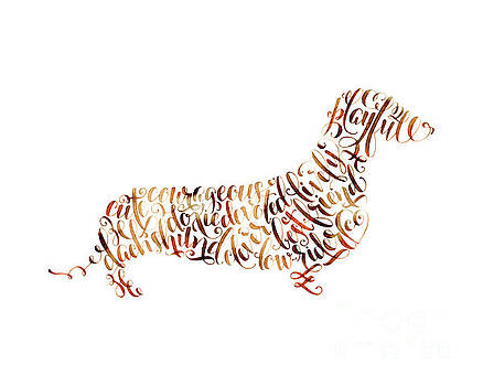 Dachshund by Laura Bell
