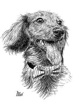 Dachshund @longboy_lincoln by ZileArt