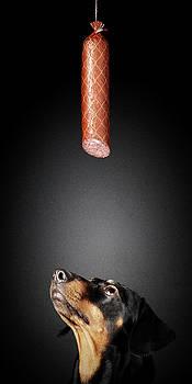 Dachshund looking up at salami by Johan Swanepoel