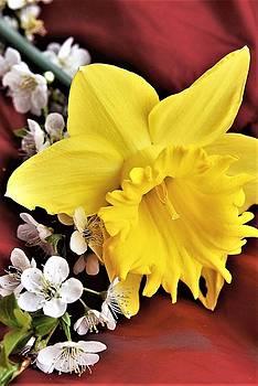 Spring Arrives by Kim Bemis