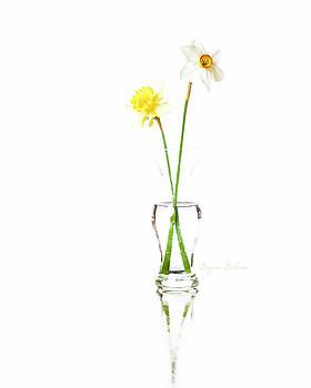 Daffodil Beauty by Nena Pratt
