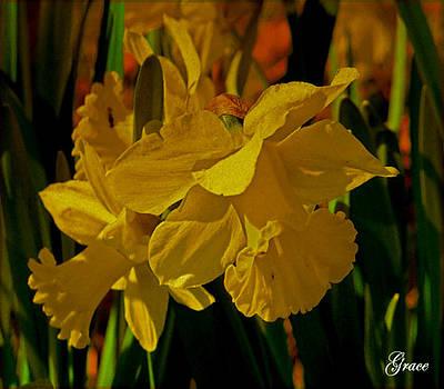 Daffodil Dance by Julie Grace