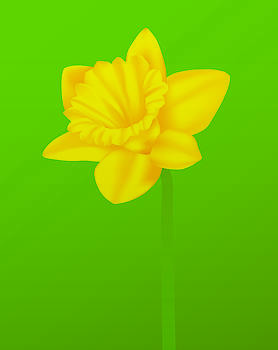 Daffodil by David Strong