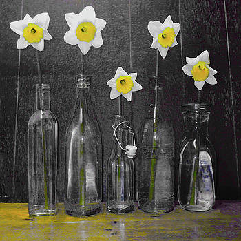 Daffodil Delight by P Donovan