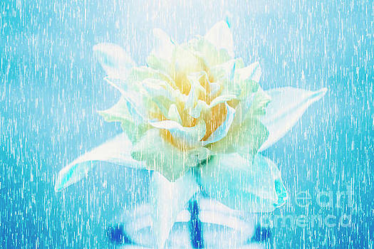Daffodil flower in rain. Digital art by Jorgo Photography - Wall Art Gallery