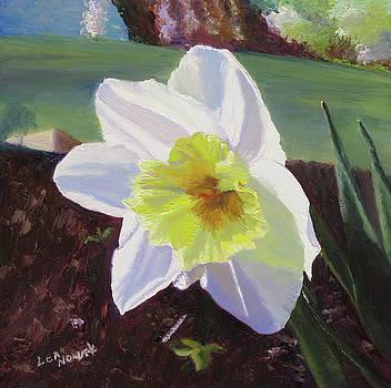 Lea Novak - Daffodil in the Sun