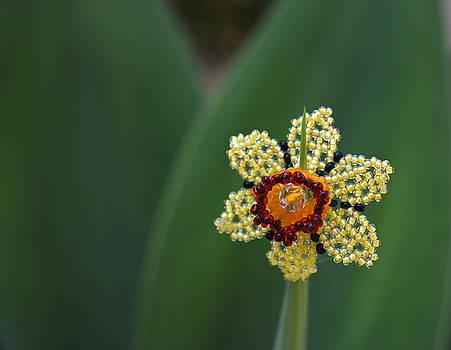 Daffodil by Inessa Williams