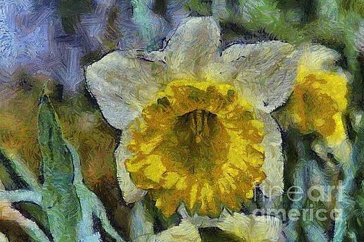Rod Wiens - Daffodil