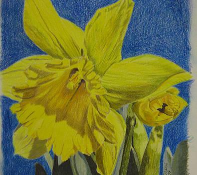 Daffodil by Sherri Ward