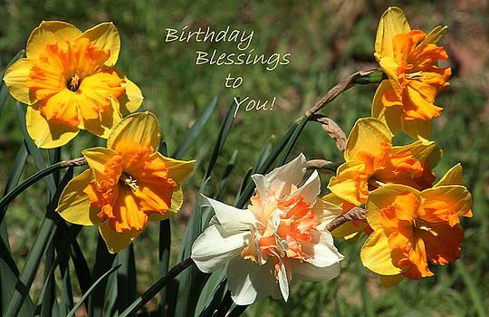 Daffodil Splendor by Rosanne Jordan