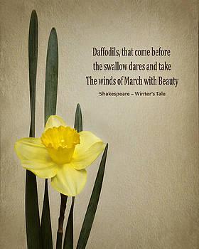 Daffodil - Spring by Nikolyn McDonald