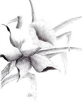 Daffodil by Vicki Thompson