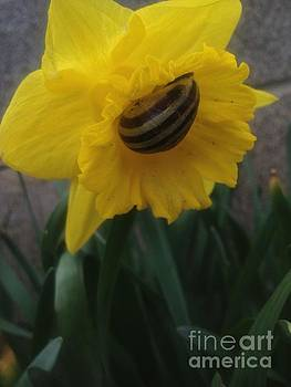 Daffodilling Snail Vers 3 by Iris Newman