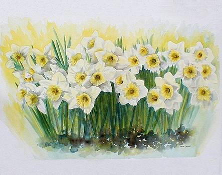 Daffodils by Anita Carden