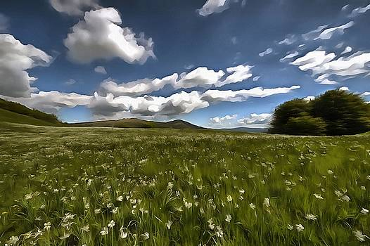 DAFFODILS BLOSSIMG AT CAVALLA PLAINS 2016 1p by Enrico Pelos