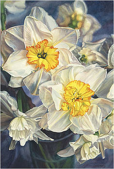 Daffodils by Cherie Sikking