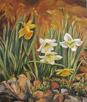 Daffodils by Cheryl Pass