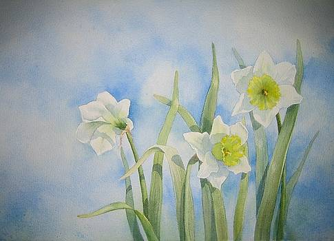 Daffodils by Holly Cooley