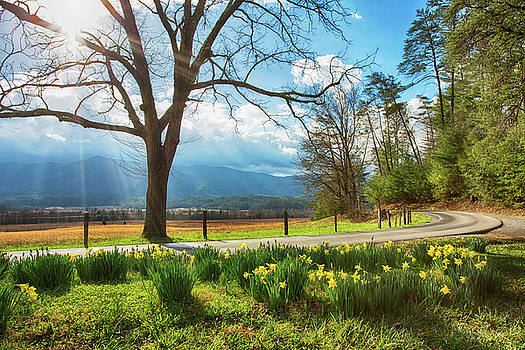 Daffodils In Bloom In The Mountains of Cades Cove in Smoky Mount by Carol Mellema