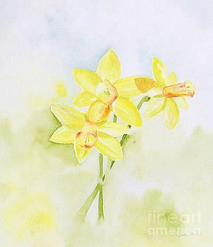 Daffodils in Spring by Jordan Parker