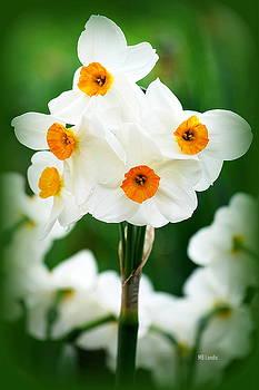 Daffodils by Mary Beth Landis
