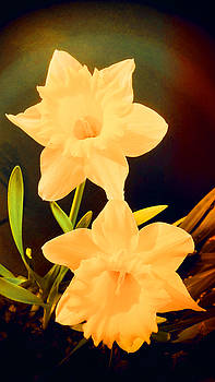 Mike Breau - Daffodils