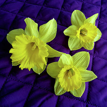 Tara Hutton - Daffodils on a Purple Quilt