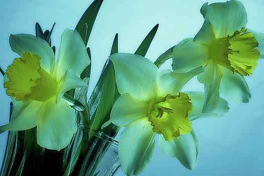 Daffodils2 by Loni Collins