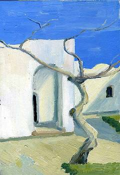 Dahab. Acacia Tree by Lelia Sorokina