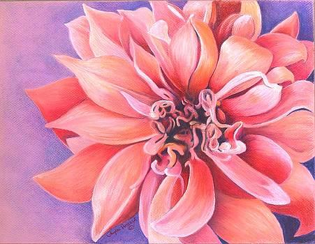 Phyllis Howard - Dahlia 2