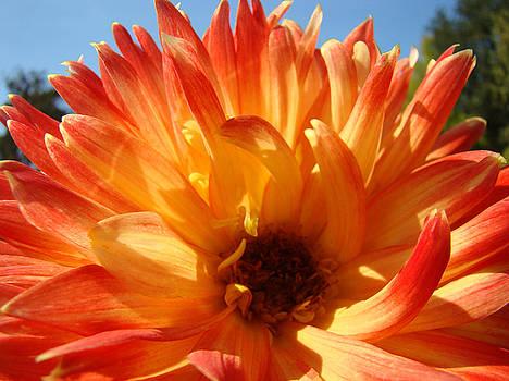 Baslee Troutman - Dahlia Floral Orange Yellow Flower Botanical Art Prints Canvas Baslee Troutman