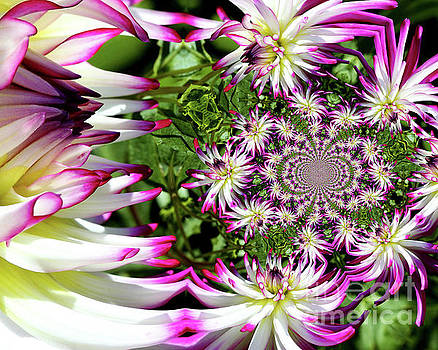 Dahlia Flower Abstract by Smilin Eyes  Treasures