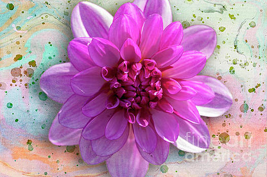 Heiko Koehrer-Wagner - Dahlia Flower Series one