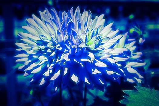 Dahlia in Abstract Color by Debra Lynch