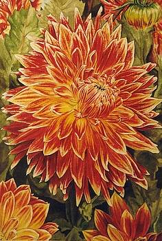 Dahlia in Full Glory by Collin Edler