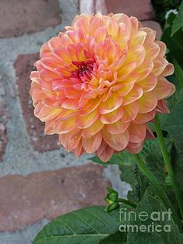 Dahlia by James B Toy