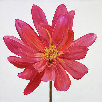Dahlia by Kathy Armstrong