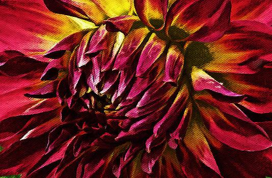 Dahlia Macro - Bloomquist Rose by William Wooding