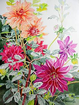 Dahlias 1 by Vishwajyoti Mohrhoff