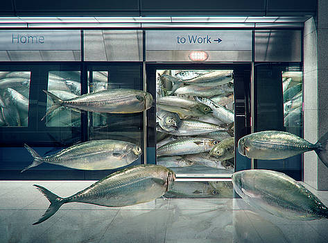 Daily Sardine by Andrew Kow