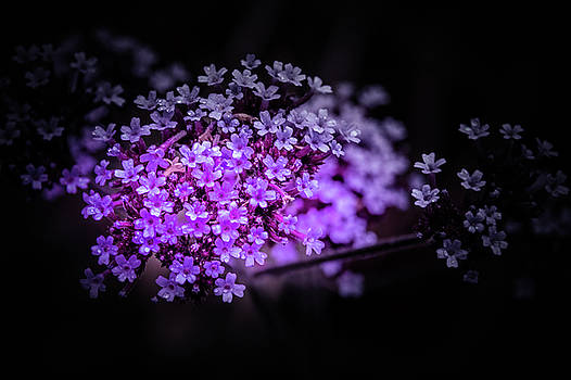 Dainty little petals by Bren Ryan