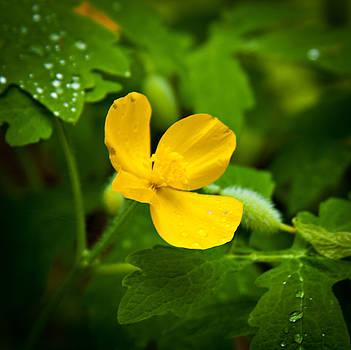 Dainty Yellow by Laura Wiksten