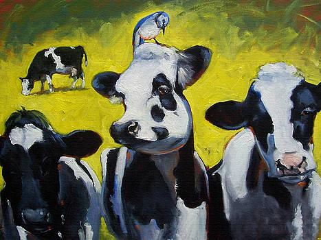 Dairy Queen by Susan Jenkins