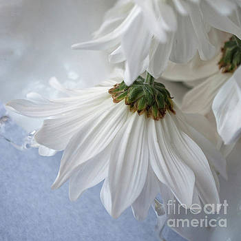 Daisies, Aged 2 by Brenda Leitow