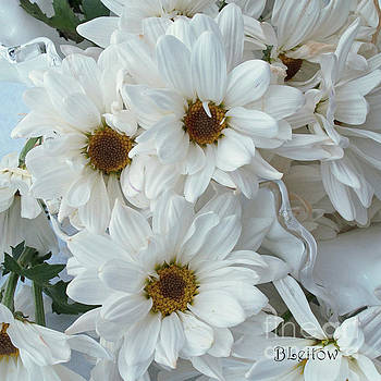 Daisies, Aged by Brenda Leitow