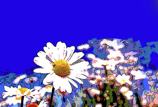 Daisies by Charles Shoup